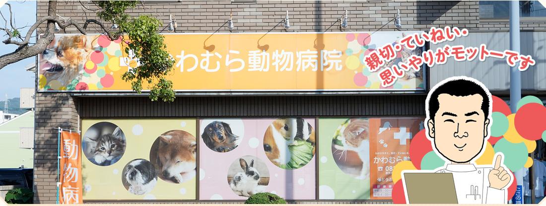 くどう動物病院の評判・口コミ - 山口県下関市【動 …