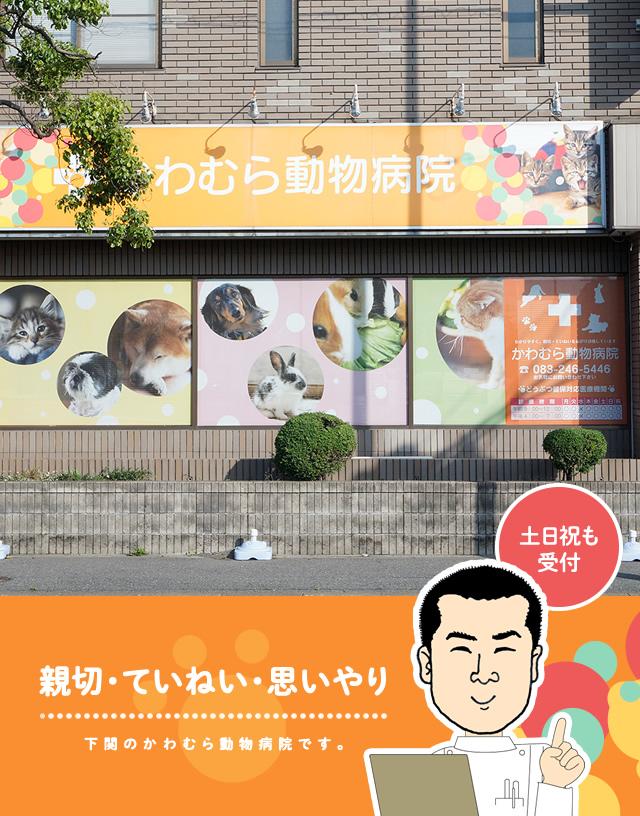 下関市菊川町の動物病院なら、くどう動物病院